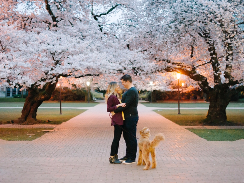 uw quad engagement cherry blossom photos