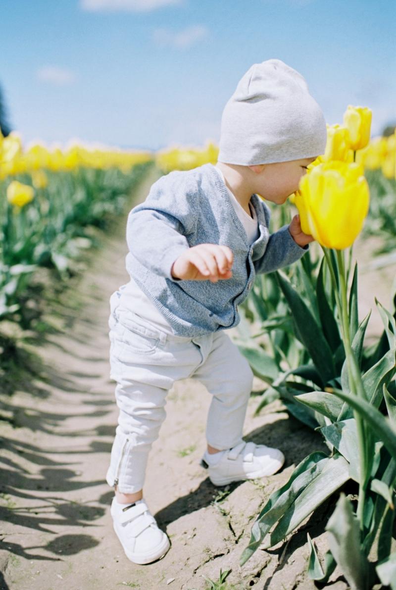 Baby-Tulip-Fields-WA-001