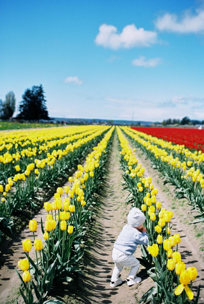 Baby-Tulip-Fields-WA-002