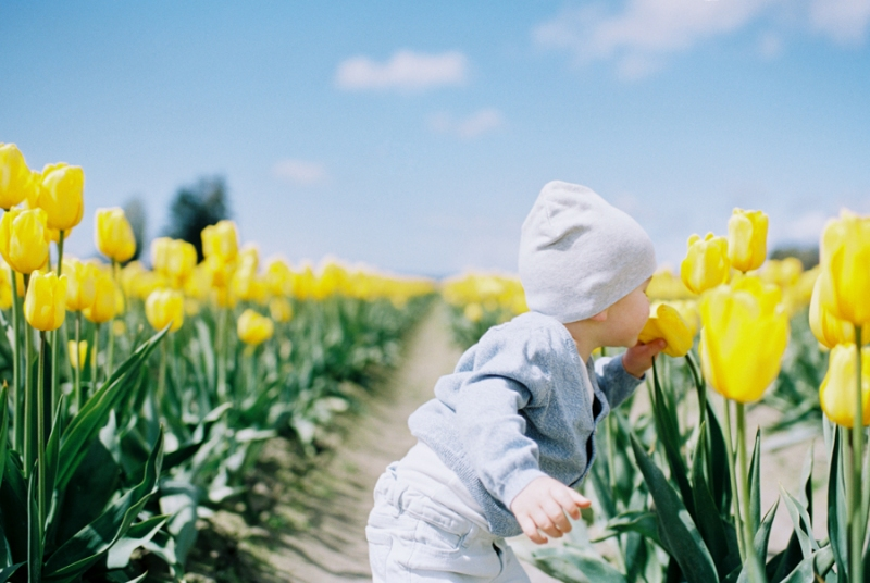 Baby-Tulip-Fields-WA-010