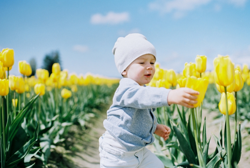 Baby-Tulip-Fields-WA-012
