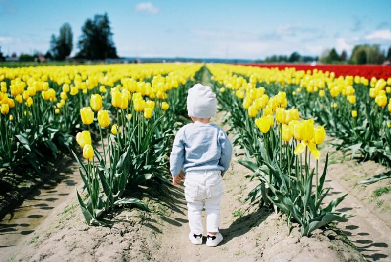 Baby-Tulip-Fields-WA-015