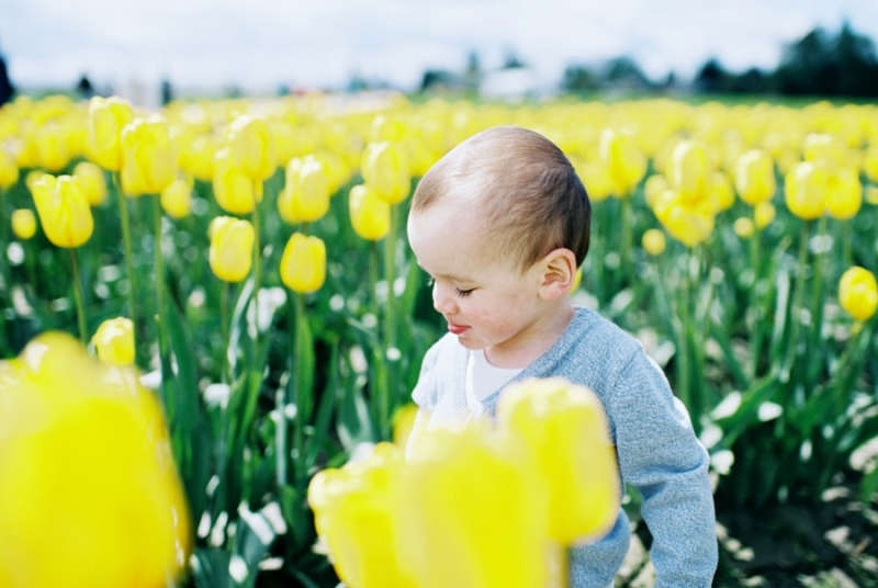 Baby-Tulip-Fields-WA-025