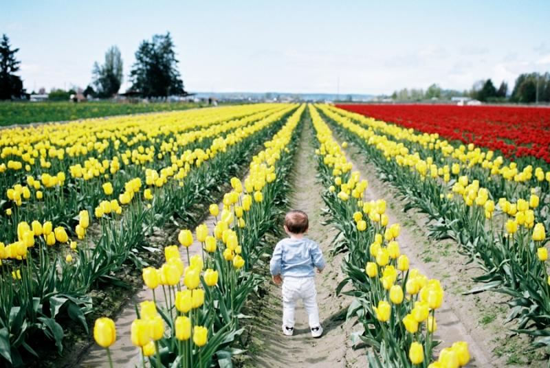 Baby-Tulip-Fields-WA-026