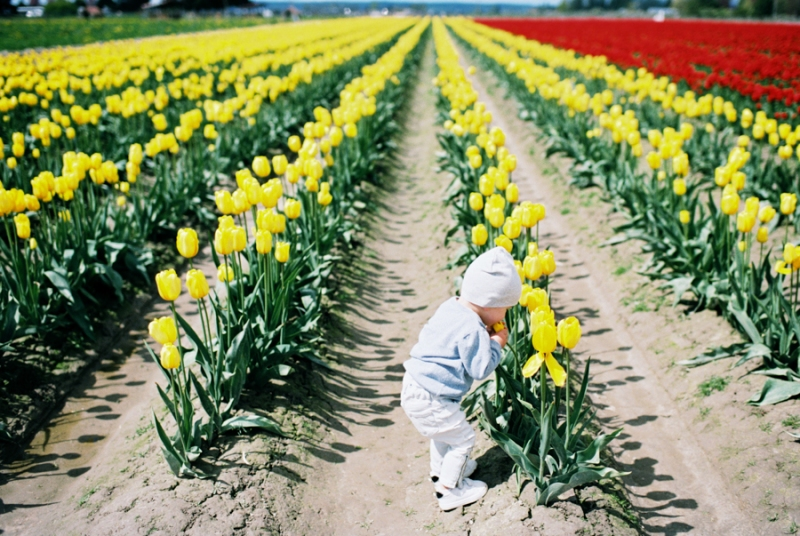 Baby-Tulip-Fields-WA-032