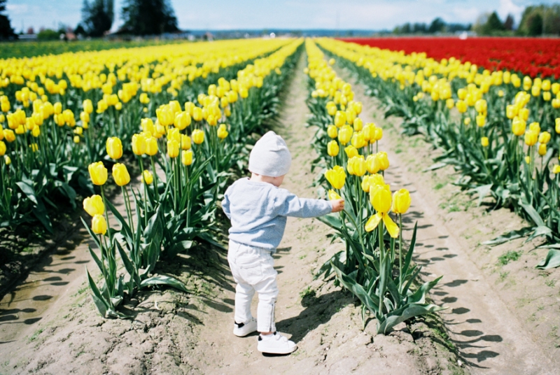 Baby-Tulip-Fields-WA-033